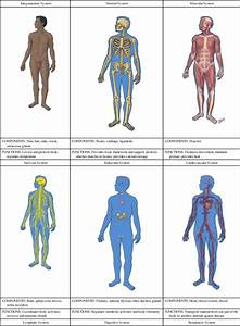 Anatomical Position Drawing At Getdrawings Com Free For Personal Use ...
