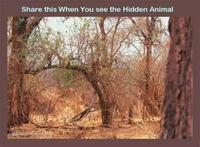 Find the Hidden Animal Puzzle