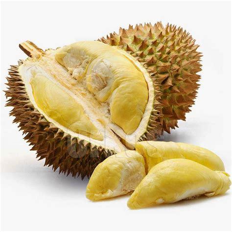 berikut  gambar durian info gambar