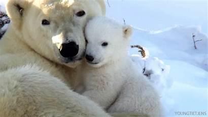 Bear Polar Gifs International Animals Cutest Animal