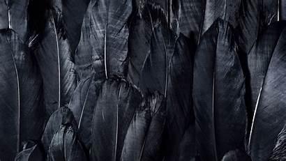 Dark Feathers 4k Background Uhd
