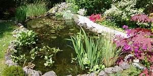Plante Filtrante Pour Bassin : le bassin de jardin ~ Louise-bijoux.com Idées de Décoration