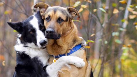 Dog Siblings Who Love to Hug Each Other Will Melt Your