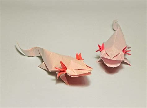 cute  axolotl couple designed  folded  roman