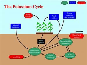 Potassium (K) mandatory for plants under drought condition