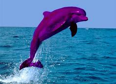 480x800 : Pink Dolphin Wallpapers