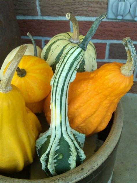 decorating gourds 1000 images about fall decorating on pumpkins