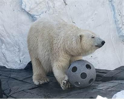Bear Polar Killer Bears Seaworld Diego Whales
