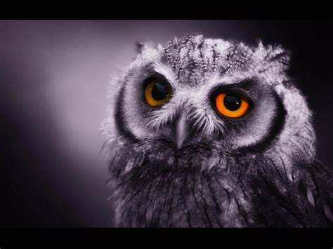 Owl Wallpapers by Wallpapers Owl