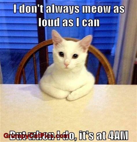 Cat Meow Meme - image gallery kitty meow meme