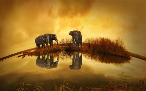 elephants thailand hd animals  wallpapers images