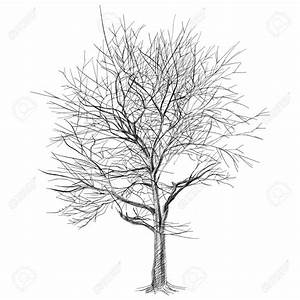 Tree With No Leaves Drawing Drawings Of Trees With Leaves ...