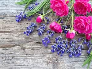 Rosen Und Lavendel : kleine vibrierende rosa rosen und provence lavendel auf der h lzernen boa stockfoto bild von ~ Yasmunasinghe.com Haus und Dekorationen