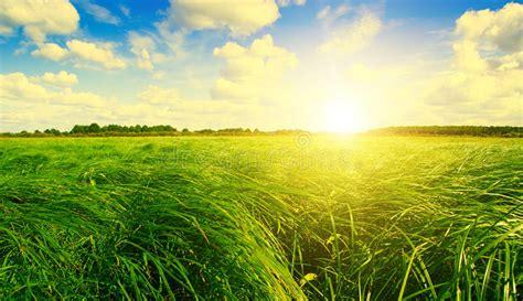 green grass field  forest  sunset sun stock photo