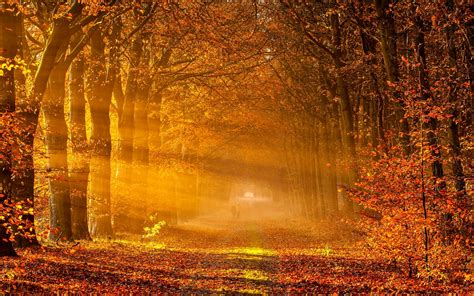 Hd Autumn Background by Autumn Hd Wallpaper Background Images