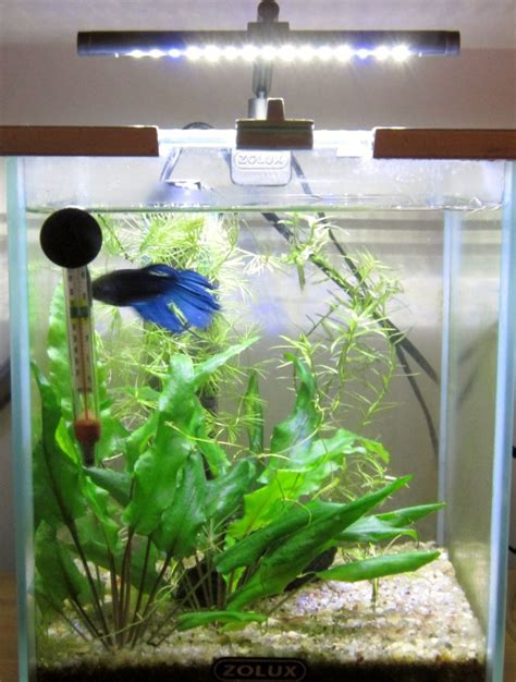 kit aquarium pour betta