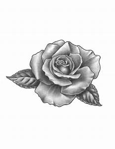 Rose Tattoo Sketch: Real Photo, Pictures, Images and ...