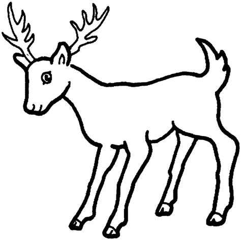 education  animal deer coloring pages