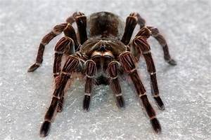 Everything you wanted to know about spiders – but were too ...