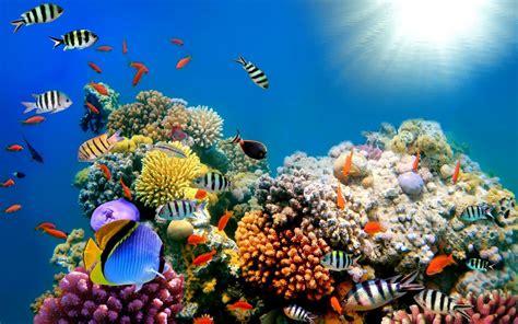 coral wallpapers hd pixelstalknet