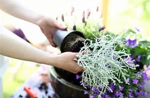Wie Pflege Ich Hortensien : wie pflege und pflanze ich stauden im herbst g rtnerei aeschlimann ~ Frokenaadalensverden.com Haus und Dekorationen