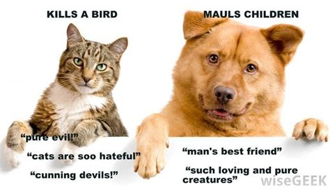 cats dogs better than cat pets dog vs