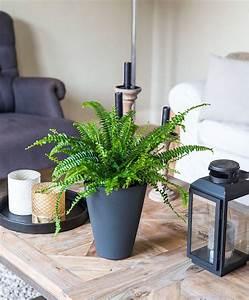 Zimmerpflanzen Für Wenig Licht : 1001 ideen f r zimmerpflanzen f r wenig licht plants ~ A.2002-acura-tl-radio.info Haus und Dekorationen