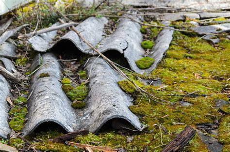 asbestos encapsulation removal news  city