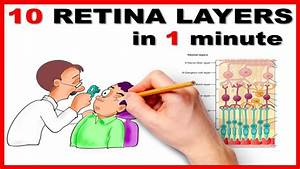 Retinal Layers In 1 Minute    Mnemonic Series   13