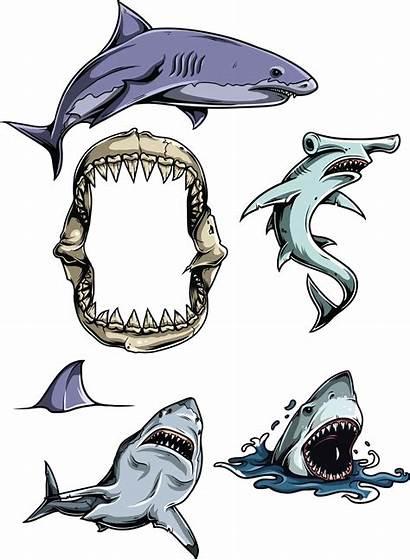 Sharks Clipart Vectors Cgispread Rekin Pomysły Tatoo