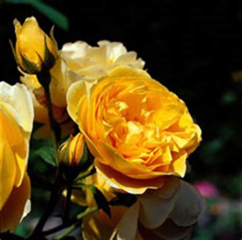 Der Garten Als Sinnbild by Bringen Fr 252 Hlingslaune Ins Haus