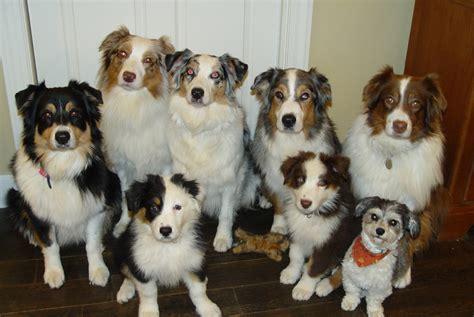 Pet Care Pet Care Libguides At San Antonio Public Li Ry