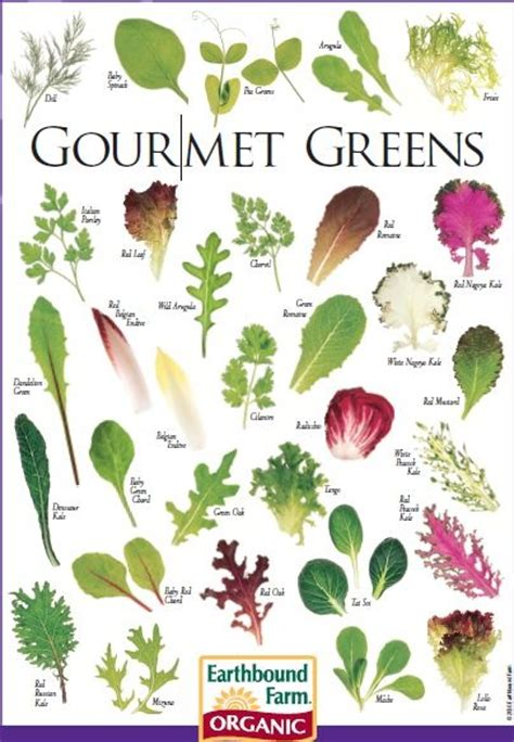 kinds of lettuce greens 17 images about lettuce mix on pinterest different types of types of and farms