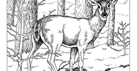 deer skull drawings joseph blogs whitetail deer tattoos