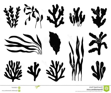 hd seaweed silhouette black  white image  vector