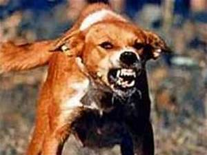 The dog in world: knowledge about Rabies in Dogs