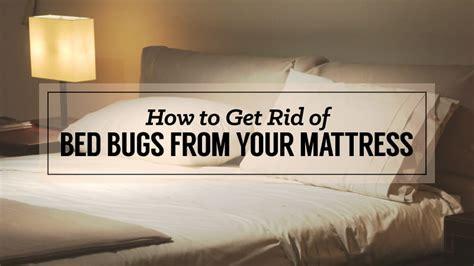 rid  bed bugs   mattress updated