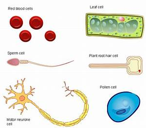 2 4 Life Processes At The Cellular Level