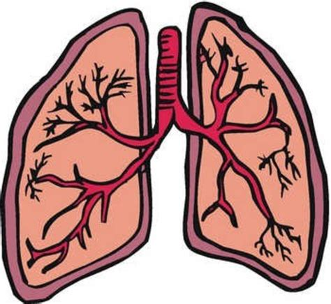 Lungs Clipart Lung Free Images At Clker Vector Clip