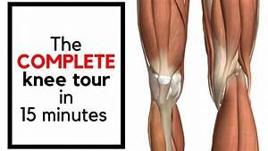 Knee Anatomy In 15 Minutes Knee  Joint  Meniscus