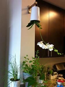 Boskke Sky Planter : boskke sky planters the black pug ~ Orissabook.com Haus und Dekorationen