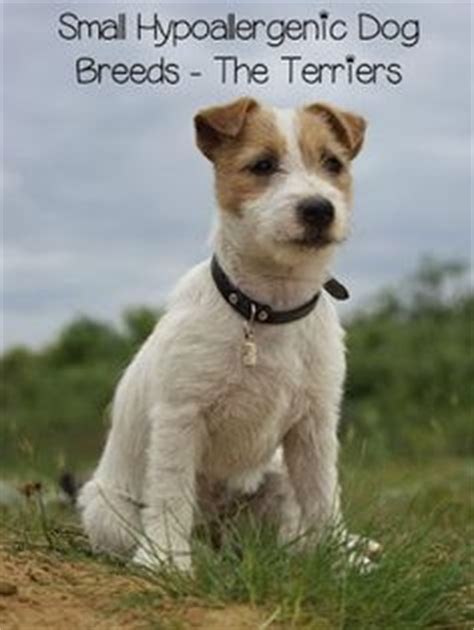 low shedding dogs in india 1000 ideas about hypoallergenic breed on