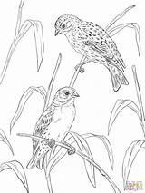 Coloring Canary Canaries Printable Atlantic Supercoloring Popular Coloringhome sketch template