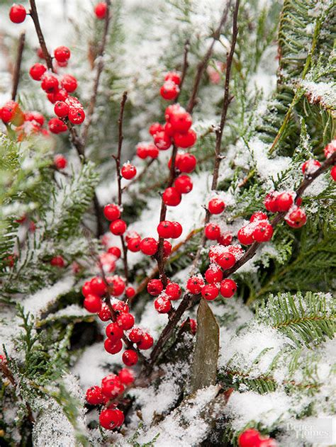 what deciduous tree has berries in winter shrubs with winter interest better homes gardens