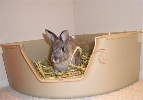 best rabbit litter boxes adopt a rabbit
