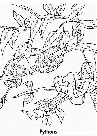 Coloring Rainforest Ausmalbilder Waldtiere Colouring Printable Regenwald