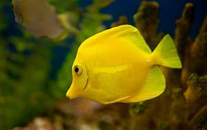 Freshwater Fish Desktop Wallpaper 18355 - Baltana
