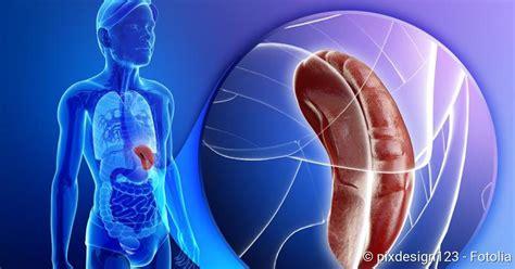 splenomegalie ursachen erkrankungen operation netdoktor