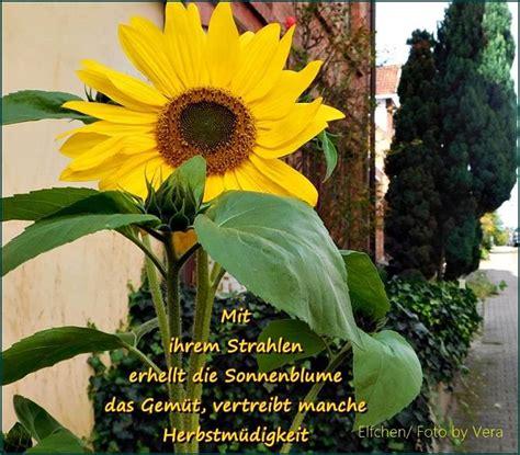 sonnenblumen zitate spr 252 che