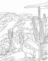 Coloring Coyote Pages National Park Howling Mountain Saguaro Symbols Florida State Printable Drawing Road Arizona Zion Teton sketch template
